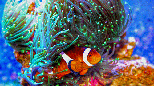 tauchreise-malediven