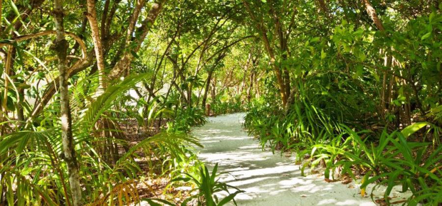 Reethi Beach Resort Natur