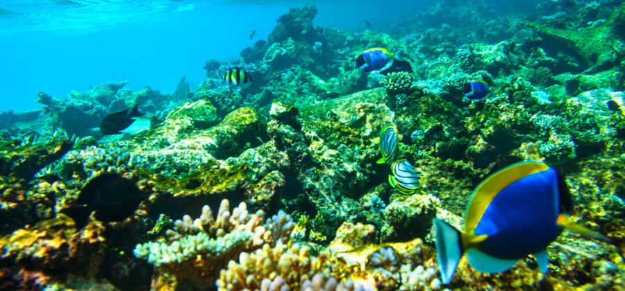Robinson Club Maldives Schnorcheln