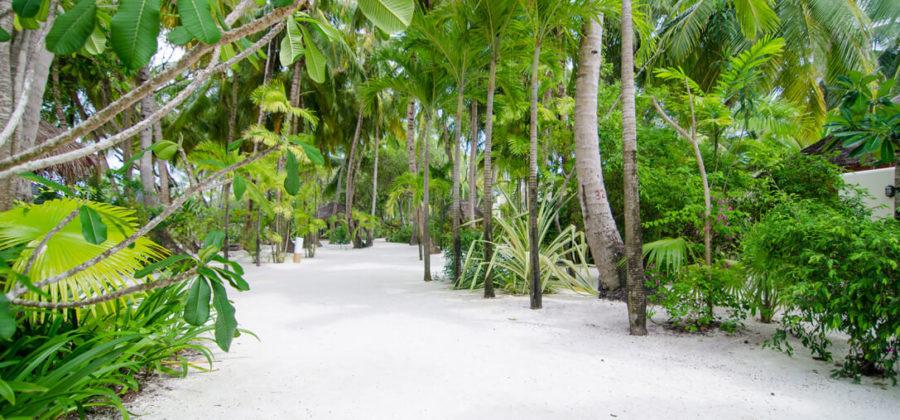 Summer Island Maldives Insel Flora