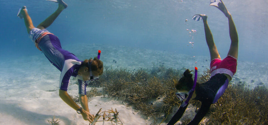 Anantara Dhigu Korallen Anbau