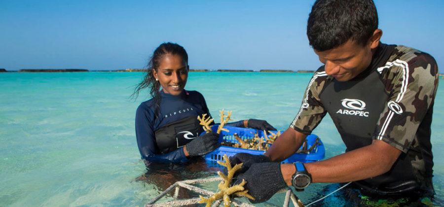 Kurumba Korallen Aufbau